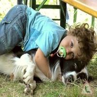Собака в доме - радость в жизни