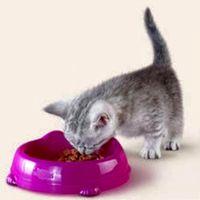 Правильное кормление домашней кошки