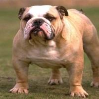 Что делать, если у собаки ожирение