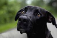Болезни глаз собак