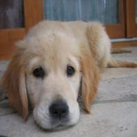 Готовим квартиру к содержанию собаки