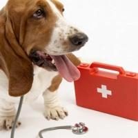 Собираем аптечку для животного