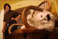 Кошка в семье