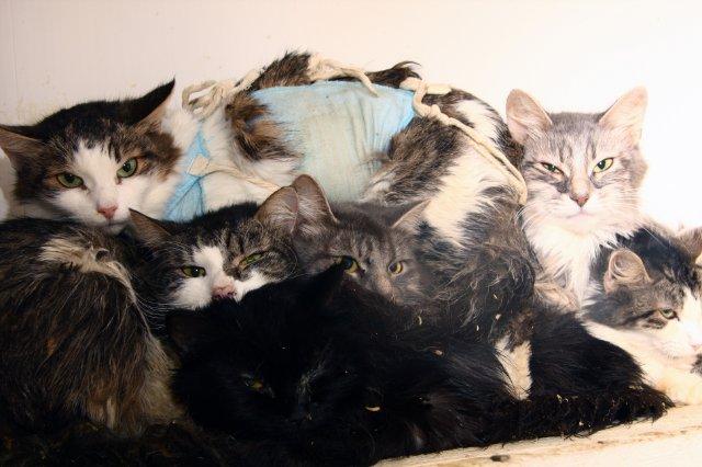 Кошачий кошмар в приюте