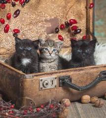 Котята Орешки