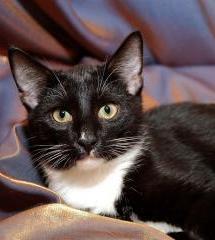 Смурфик-котенок
