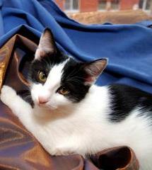 Тетрис-котенок