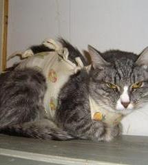 Кошки в приюте