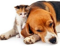 Собака или кошка