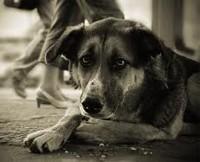 Собаки тоже плачут
