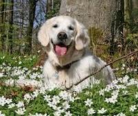 Защита собаки от болезней