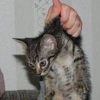Можно ли брать за шкирку кота