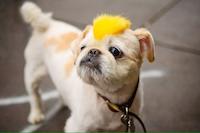 Окрашивание собак