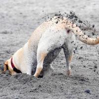 собака-копака