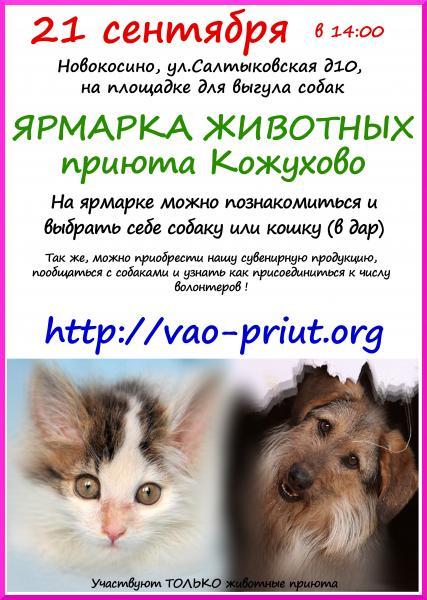 Опубликовано на сайте.  Приют для бездомных животных, г. Москва, Кожухово.Пожалуйста. comments.