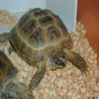 Черепаха - чудо на всю жизнь